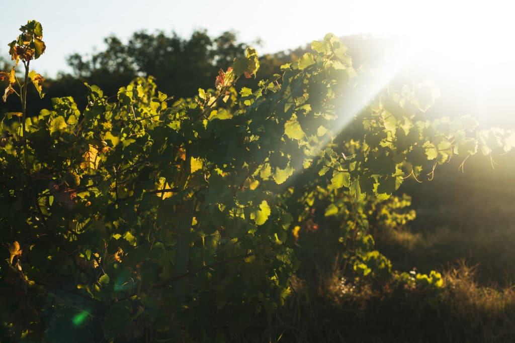 vigne parandou domaine rayon de soleil